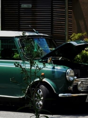 緑(524x700).jpg