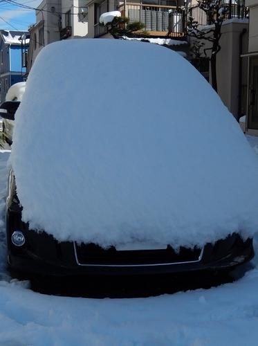 雪 (523x700).jpg