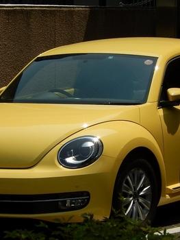 黄色 (526x700).jpg